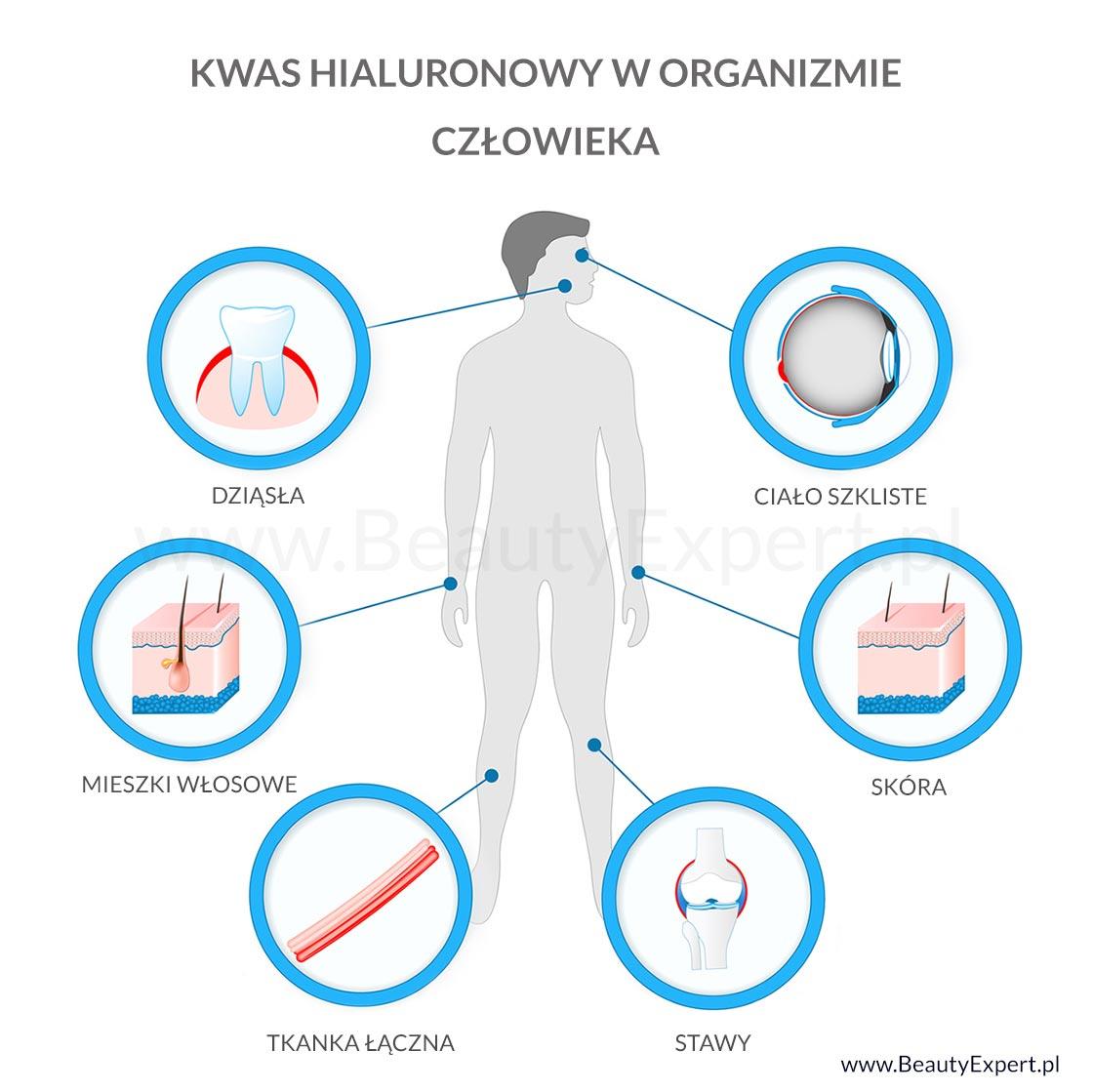 Kwas hialuronowy w organizmie człowieka